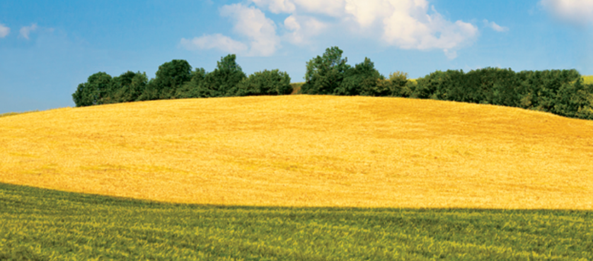 two-tone_field_header.png